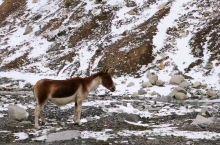 可可西里~偶遇小毛驴!