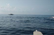海豚湾之三-菲律宾宿雾海豚湾名不虚传! 今年暑假在菲律宾宿雾,看海豚绝对是我们此行最大的收获之一!
