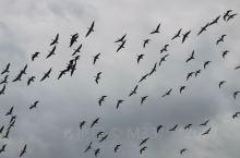 自由的飞翔!