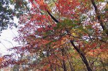 蒲石河森林公园美美的秋天,停车坐爱枫林晚,霜叶红于二月花