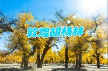 敦煌胡杨林丨丝路古道上的靓丽秋景 敦煌的胡杨林要比其他地方都要迟,当你穿越过莫高窟、鸣沙山·月牙泉、