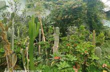 走进热带植物园,似到南方,潮热扑面而来,绿色四面养眼,如果没有看到顶棚的玻璃罩顶,还真以为进入了自然