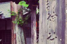 忍野八海——诹访神社 日式神社是日本文化中不可或缺的一部分,几乎所有的日本城镇都有一座神社,是参拜祈