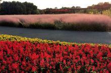 """幕色难掩的浪漫秋色        常州光伏产业公园,作为常州""""一核八园""""的重要一园,位"""