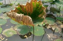 在天津生活了三年多,水上公园去过三次,一次夏季,两次春季,面积大,建议夏季去,水量充足,喷泉都打开了