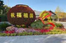 植物园的菊花盛开