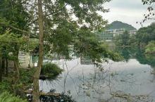翠绿的树枝,高大的竹林,还有清澈的水中倒影,这一是点耐人寻味!