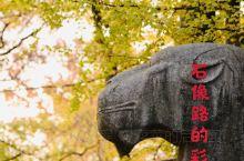 南京最美600米-石象路的惊艳秋景