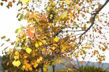 多彩塔川 人生就像一场旅行, 最多最美的风景都在路上。 旅行的意义不仅仅是眼睛看到的大好河山, 还有
