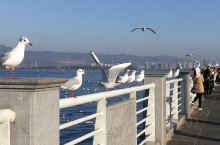 这些海的精灵在春城暂时停下脚步,是因为这里四季如春的温暖还是因为人们的呵护?波光潋滟,鸥鸟翩飞,自然