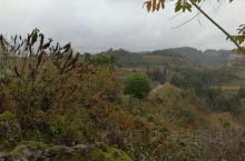 虽然已是初冬,黔南乡村的秀色依然能够展现出来。