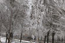 冬季一到下雪天路边的树上就银装素裹世界仿佛都变得纯净了