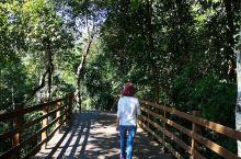 当然没看到野象,不过,树林密,空气好,阳光明媚,还有猴子嬉戏,感受大自然的美好,心情也就跟着美好起来