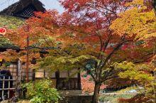香岚溪枫叶节  虽然枫叶节是从11.1号办到了11.30号 但是实际上枫叶是从月中才开始大面积红的