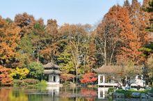 杭州植物园-山水园 秋天看叶子比花美,红得透了,像火一样缀在绿色中间。黄色,并不是失去了生机,它使这