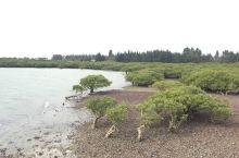 美丽的特程岛,美丽的湛江,广州湾上的明珠!非常值得一游,有时间的话住一晚就更好了!