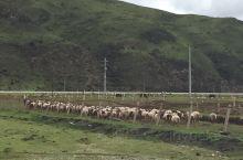 甘南藏族自治州境内有尕海——则岔两个国家级自然保护区、莲花山和冶力关国家森林公园,以及桑科草原、黄河