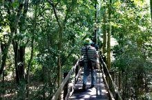 亚马逊热带雨林 - 亚马逊热带雨林一年分雨季和旱事,雨季去亚马逊,就可以撑着小船在两林中穿行,但管理