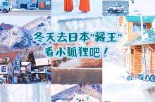 """冬天去日本除了北海道还可以来""""藏王""""看""""小狐狸""""  冬天去日本不一定要去北海道,推荐你们一个更小众好"""
