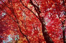 本溪枫叶 关门山国家森林公园