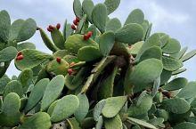 心无挂碍,无有恐怖。  推荐理由: 马耳他,特色植物。巨型仙人掌。走走看看,放松心情,提高免疫力。