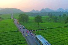 """积庆里茶园:""""中国美丽田园""""之一,茶园坐落于英德市横石塘镇,始建于800年前的宋代时期。""""福由明德积"""