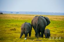 在家云旅游,想起2013年在东非大草原旅行时,记录下来的野生动物,它们这么可爱,为什么有人还忍心吃它