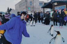 北海道Day3‖旭川动物园里那些可爱的小家伙们(游玩攻略)  概述: 日本最北端的动物园,日本规模最
