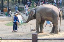 ·美莎大象营是清迈最大的大象训练学校,共饲养了一百多头大象,也是游客青睐的游览地。 ·在这里,你可以