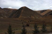 自驾西藏 新疆 318 219 109一路风景 美轮美奂 可以说 中国最美的秋都藏在了川藏线