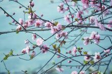 本是春暖花开的季节…… 出门赏花,人少,花开得正艳……