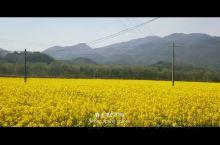 """""""春天来的时候,总觉得会发生些什么,可等到春天过去了,又觉得仿佛错过了什么。"""" 你的家乡是否也掀起黄"""