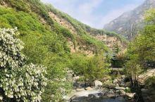 少华山国家森林公园,自然风光绮丽,文化底蕴深厚,是陕西东部黄金旅游线上以生态旅游、休闲度假、登山健身