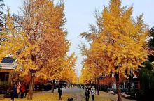《来自莘县的诱惑:我真的想要去旅游……》  我是孤独浪子,希望我的拍拍让您有所收获。 漫游神州31载