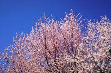 春暖花开又一春