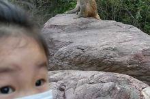 首先景色特别美,看到景区的猴子就觉得不虚此行,猴子特别聪明可以和人互动,孩子玩的也特别开心。不过,开