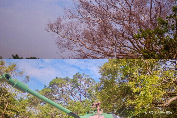 Banyan Park1