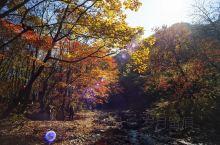 秋天去哪玩|本溪枫叶之旅 秋天赏枫叶不用去国外,辽宁本溪关门山满足你的一切愿望。  这次照片有幸请到