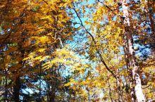 秋天的贝加尔植物园,一片红叶浪漫。