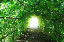 伯明翰大学的后花园,恬静闲适,自然美丽,点上一杯咖啡,静享午后时光