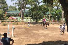 印尼万隆的骑术学校,可以随时参观。也可以体验马术的乐趣