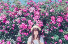 蔷薇花开私藏秘境推荐~少女们去拍写真吧!  又到五月蔷薇花开的季节,粉粉的蔷薇非常适合少女们拍出清新