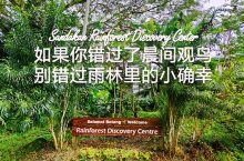 如果你知道,山打根是除了亚马逊之外世界第二大物种丰富的热带雨林区域,那么最不可或缺的,或许就是去一次