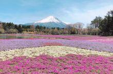 #带着父母去富士山 #新仓山浅间公园 #河口湖 #富士山 #富士芝樱节  4月份爸妈来日本 带他们看
