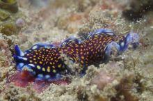 说浪就浪哟。。海底摄影  仙本那(Semporna)是沙巴州斗湖市的一个县,位于马来西亚沙巴州的东海