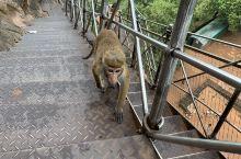 下午五点一猴群,排队上山,不扰人不惧人