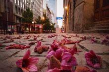 """智利旅行——圣地亚哥,让每一个日与夜都有意义。突然想起""""落红不是无情物,化作春泥更护花。""""这句诗词其"""