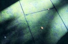 年前约朋友去了趟泸州法王寺,据说特别灵验的一座古刹 法王寺位于合江县法王寺镇,海拔820米。法王寺系