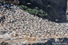 """鸟岛位于奥克兰以西90公里,曾被美国国家地理杂志评为""""全球必看的30大美景""""。 在每年的8月至次年3"""