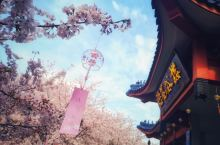 鼋头渚的春天 樱花烂漫 恰逢染井吉野樱满开时分 去和春天来一场约会 尽管周末园内人头攒动 在樱花谷中
